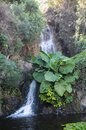 Small waterfall on the rocks between green plants Stock Photos