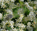 Small white flowers nature composition Royalty Free Stock Images