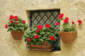 Small window with pots of geraniums