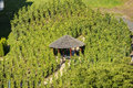A small wooden gazebo in the middle of a vineyard in Prague, Czech republic Royalty Free Stock Photo