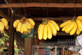 Small yellow bananas hanging on hooks Stock Images