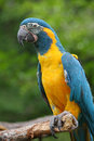 Smart bird parrot Royalty Free Stock Photos