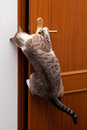 Smart cat clever getting the door open Royalty Free Stock Images
