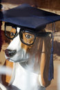 Smart dog just graduated ceramic with glasses Royalty Free Stock Image