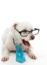 Smart dog surprised Royalty Free Stock Photo