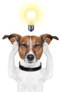 Smart intelligent dog Royalty Free Stock Photo