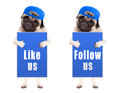 Smart Pug Puppy Dog With Blue ...