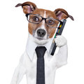 Smartphone dog business with a and glasses Royalty Free Stock Image