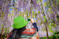 Smartphone quick share a woman wearing green hat taking picture of japanese wisteria using her for sharing Stock Image