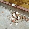 Smashed plant pot Royalty Free Stock Photo