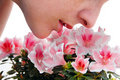 Smelling pink Azalea flowers Stock Images