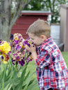 Smells like spring little boy smelling a handful of iris flowers Royalty Free Stock Photos