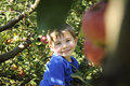 Smiling boy in apple orchard young an tree Royalty Free Stock Photo