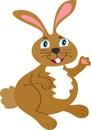 Smiling bunny rabbit