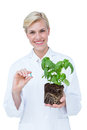 Smiling doctor holing basil plant and blue pill on white background Stock Photography