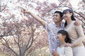 Smiling family looking up and admiring the cherry blossoms in the park in springtime beijing Royalty Free Stock Image