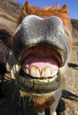 Smiling horse Royalty Free Stock Photo