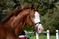 Smiling horse portrait Royalty Free Stock Photo