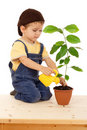 Smiling little boy watering the plant Stock Image