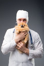Smiling male vet with phonendoscope holding cute pomeranian dog Royalty Free Stock Photo