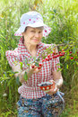 Smiling mature woman harvests cherry berries against green grass Royalty Free Stock Photos