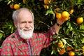 Smiling old farmer shows orange fruit