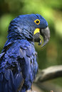 Smiling parrot Stock Image