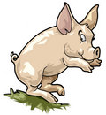 Smiling pig. Cartoon style Stock Photos