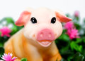 Smiling pig in the grass Royalty Free Stock Image