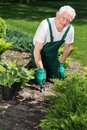 Smiling retiree caring about plants in garden Stock Images