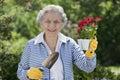 Smiling Senior Woman Holding Flowers Royalty Free Stock Photo