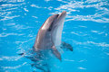 Smiling sunny colorful dolphin loking at you Stock Images