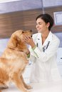 Smiling veterinary with dog Royalty Free Stock Photo