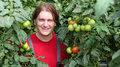 Smiling Worker Picking Tomatos Royalty Free Stock Photos