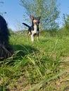 Smily dog Royalty Free Stock Photo