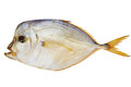Smoked fish piranha isolated on a white with clipping path Stock Images