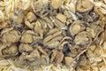 Smoked scallops on orzo pasta Royalty Free Stock Photo