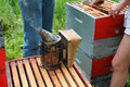 Smoker on open super beekeeping sitting frames of Royalty Free Stock Photo