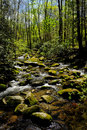 Smokey Mountain National Park Stock Photos