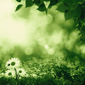 Smokey summer day on the meadow abstract natural landscape Stock Photo