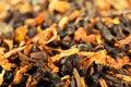 Smoking tobacco Royalty Free Stock Photo