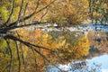 Smoky Mountain Stream in Fall III Royalty Free Stock Photo