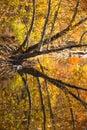 Smoky Mountain Stream in Fall Royalty Free Stock Photo