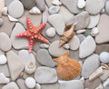 Smooth round pebbles, starfish and seashells