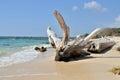 Snag on beach a caribbean coast of colombia Stock Photos
