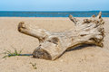 Snag on the beach picturesque shore of blue sea Royalty Free Stock Image