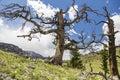 Snag dead tree mountain scenic Royalty Free Stock Photo