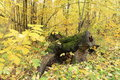 Snag in the forest tomsk siberia russia Royalty Free Stock Photos