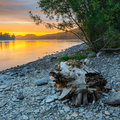 Snag on the river bank photo of a katun made at sunset Stock Photo