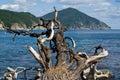 Snag and sea 4 Stock Photography